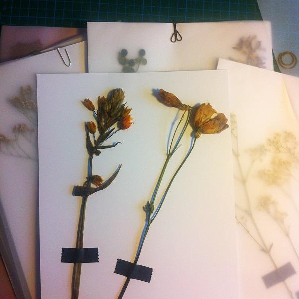 Collections-Eastern-Bird-Process-Flowers-Hamide-Design-Studio